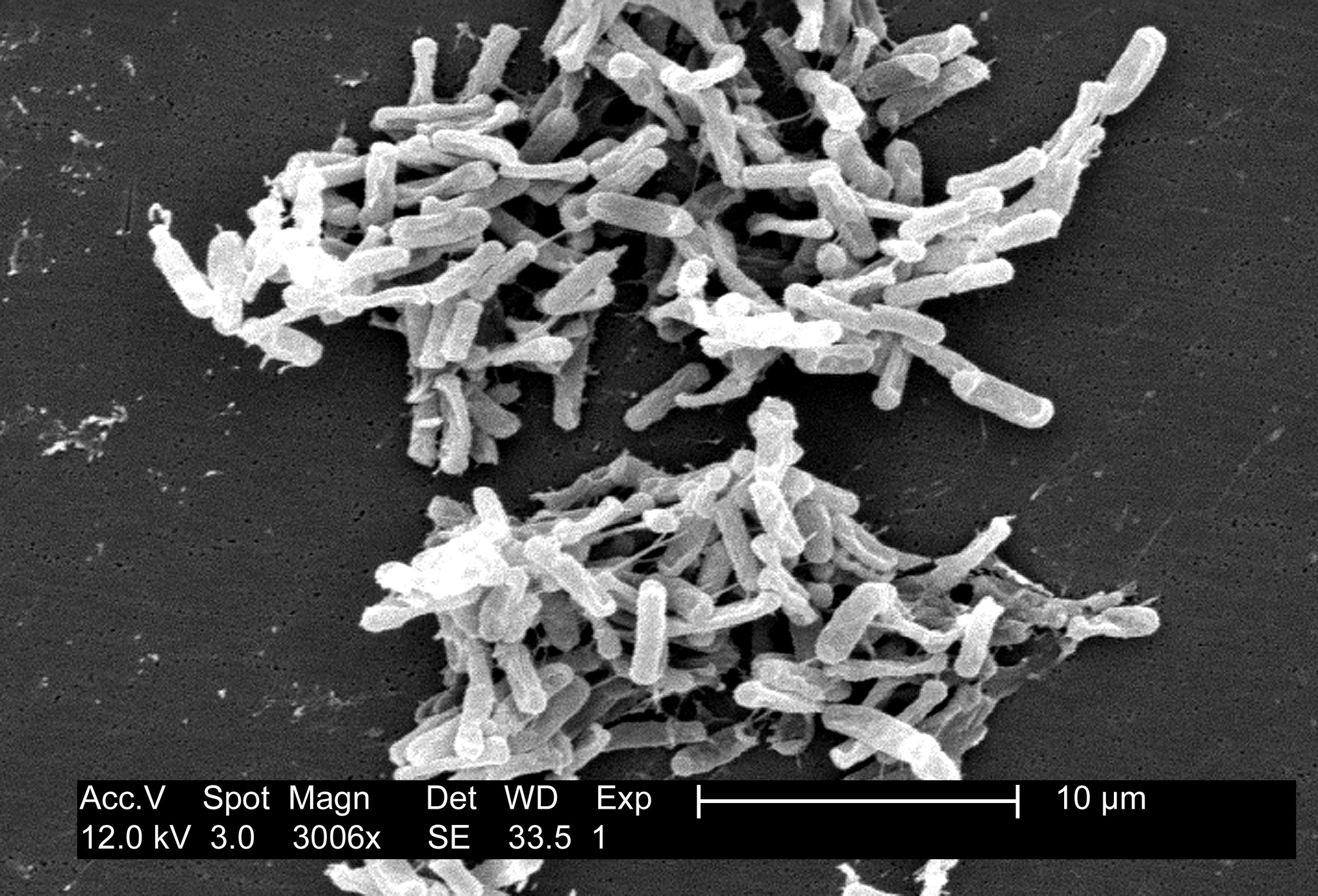 C.Diff - Clostridium difficile