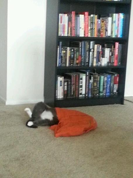 Cat_bag_3_medium