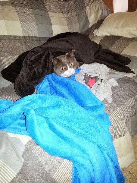 Cat_cold_1_medium