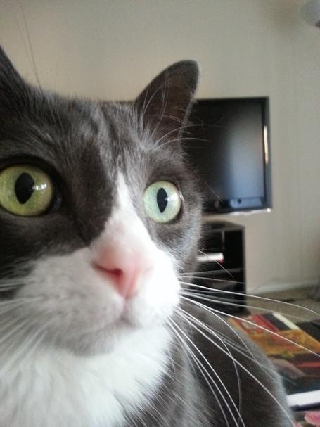 Cat_face_1_medium