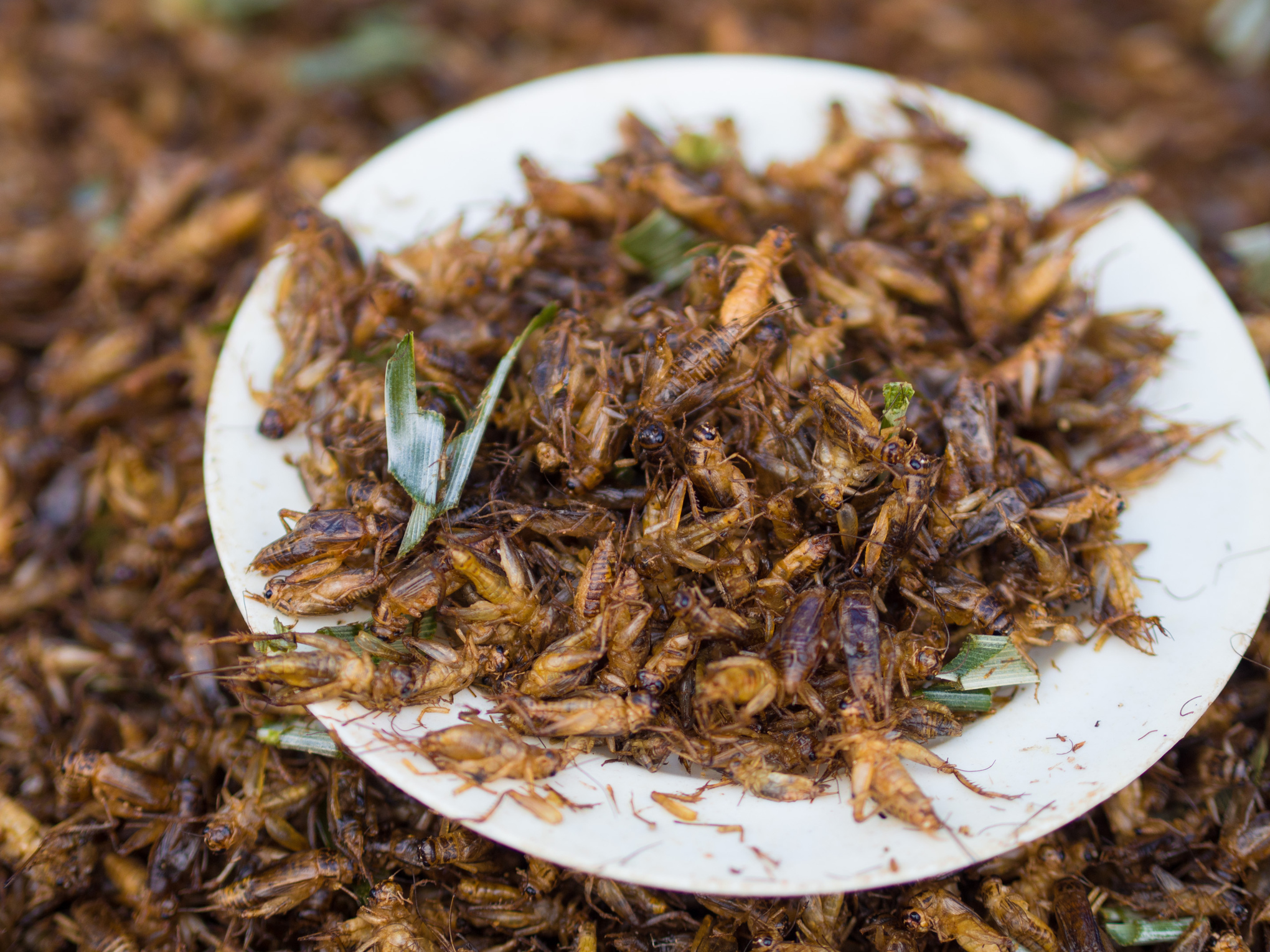 6 reasons you should consider eating insects - Vox