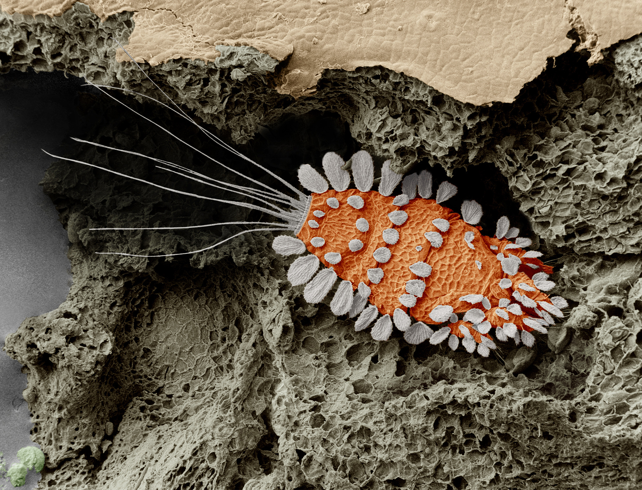 Don't freak out, but there are thousands of mites living all