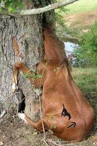Wtwf_pony