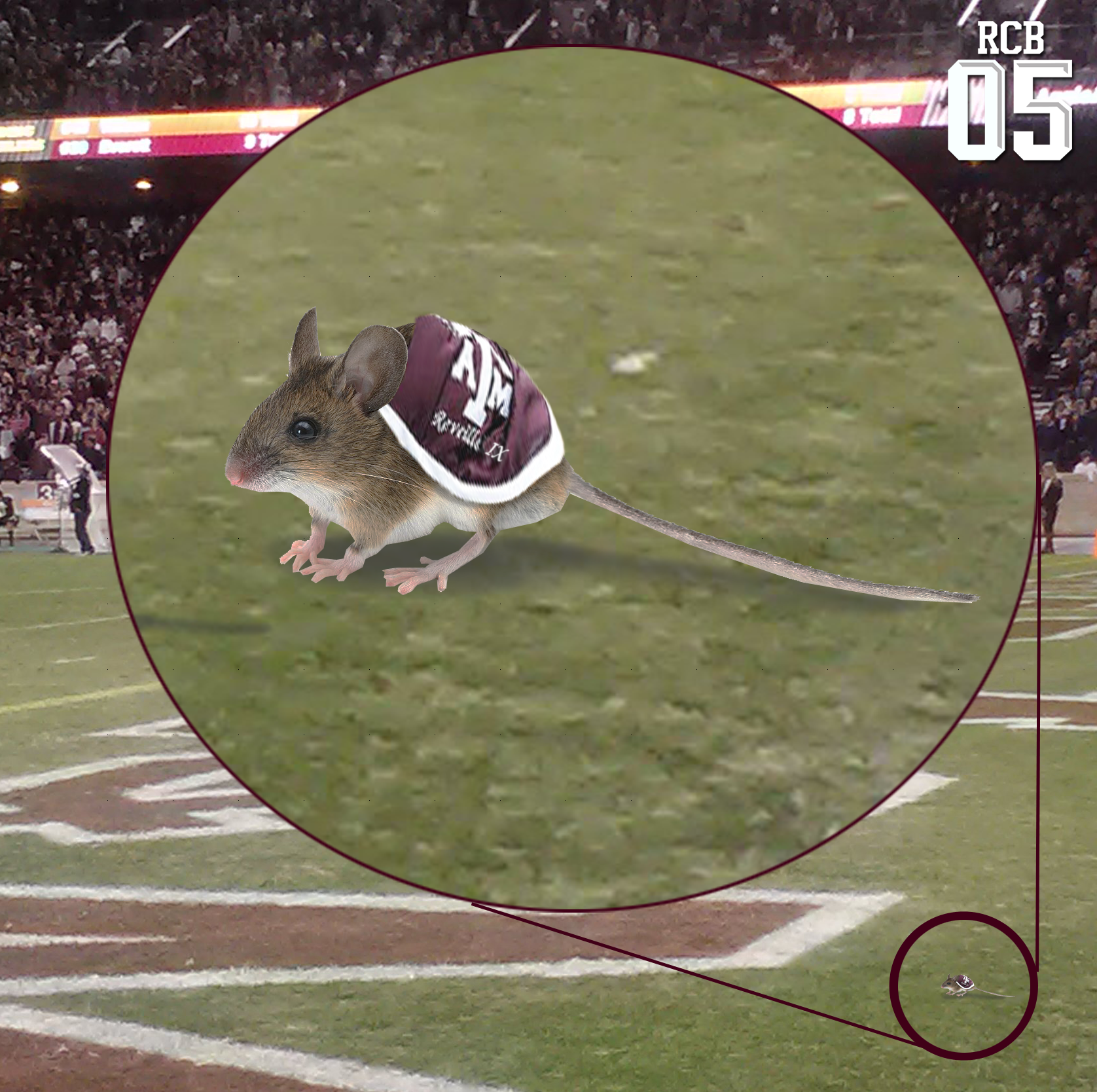 Kyle_field_mouse