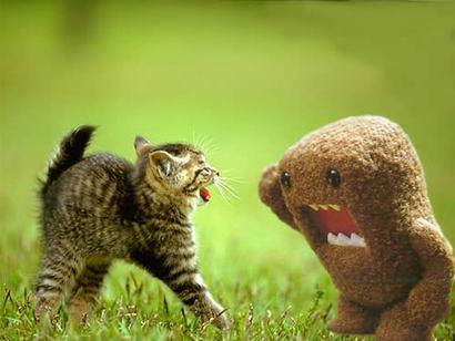 Cat-vs-domokun