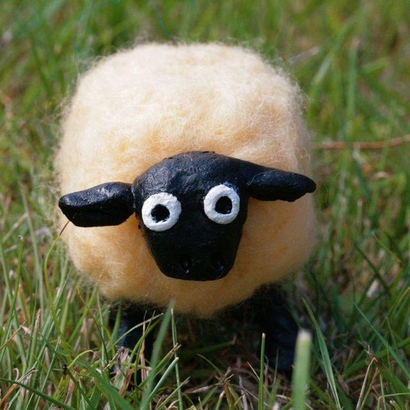 Surprised_2bsheep