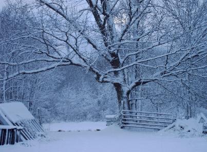 Snowymorning-403x296