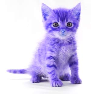 Purple_kitten