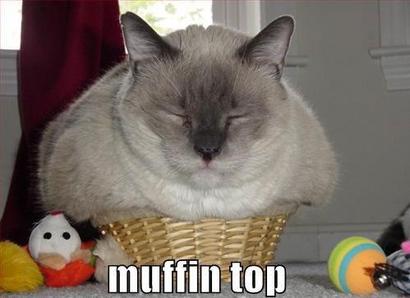 Muffin-top-cat
