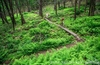 Trans-sylvania-serves-up-some-incredible-lush-green-scenery-1024x682_small