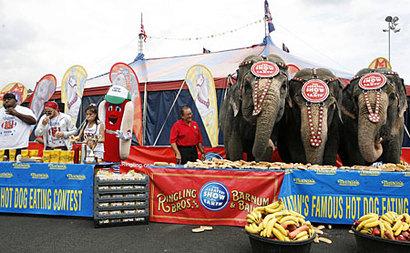 Elephantcompap_450x278