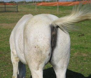Horses_ass_1-705092