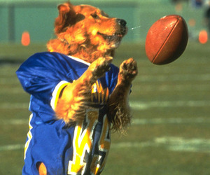 Football-dog_large_large_medium