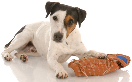 Baseballdog_medium