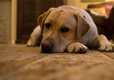 Dog-depression_medium