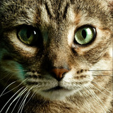 Cat_trig_002