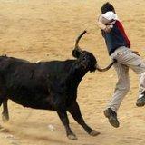 Bull-colonoscopy-756167