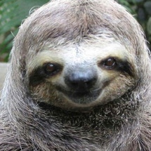 Happy-sloth-647x400