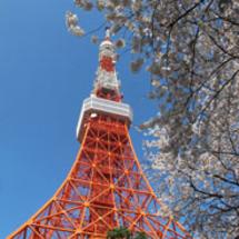 Tokyo_tower_sakura_184