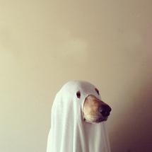 Dog-ghostbusters