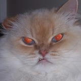 Copy_of_retardo-cat