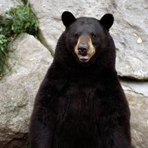 Bear_1_