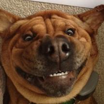 Dog_avatar
