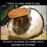 Pancakerabbit