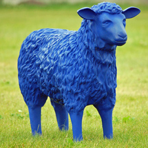 Blue_sheep_03