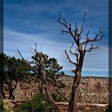 Grand_canyon_2010-2-2