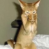 Capturecat
