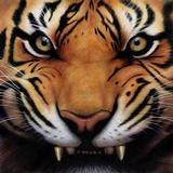 Tiger_growl