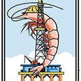 062310-logo-of-the-louisiana-shrimp-and-petroleum-festival