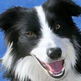 1-border-collie-sue-brehant