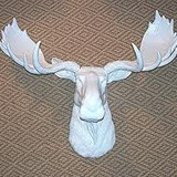White_moose_head
