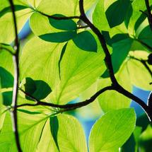 Green_leaves