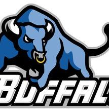 Buffalo_bull