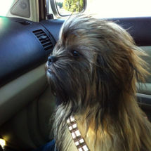 Chewbacca-puppy