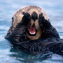 And-stay-out-of-my-sea-otter-lane
