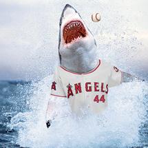 Sharktrumbo