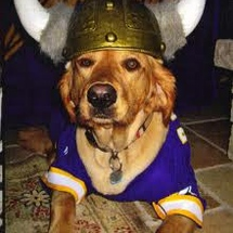 Viking_dog_2