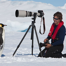 Adult-emperor-penguin-checking-out-photographer-snow-hill-weddell-sea-antarctica_199