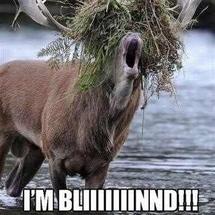 Moose_blind_resize