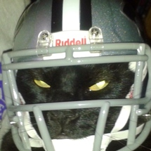 Wildcat_in_helmet