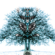 Tree_of_life_hd_by_andenanden-d5fk5mz
