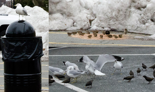 birds%20at%20sullivans%20opening.jpg