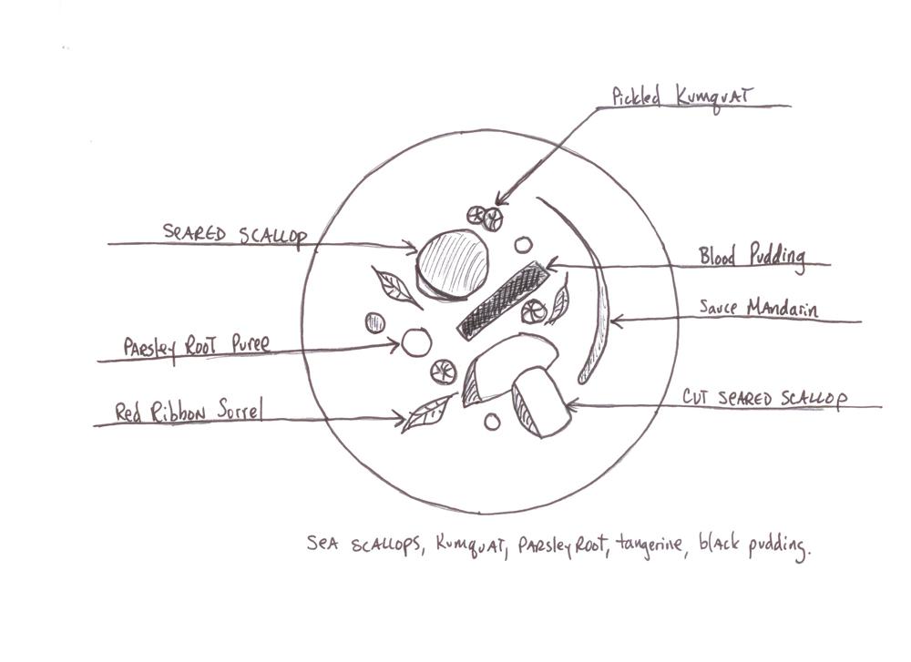 Scallop-sketch-1000.jpg