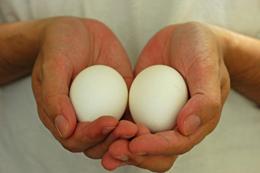 2011_two_eggs_1.jpg