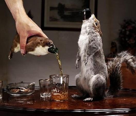 squirrel-beer.jpg