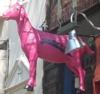 2009_02_cabrito_pink_goat.jpg